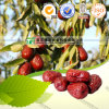 100% Pure Natural Herb Medicine Chinese Date Zizyphus