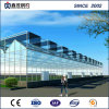 China Supplier Low Cost Glass Greenhouse for Vegetable/Garden