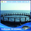 HDPE Ocean Anti-Storm High Yeild Deep Water Fish Farming Cage