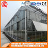 China Prefabricated Venlo Tempered Glass Greenhouse