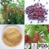 Schizandra Berry Extract Potential Heart Benefits