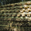100% Dry Bamboo Cane of Nature Bamboo Product