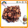 Top Quality OPC 95% Pine Bark Extract P. E. 10: 1 4: 1 20: 1