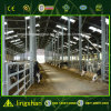 Low Cost Cowshed with Milking Parlor