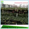 Hydroponic Glass Greenhouse with Outside Shading System
