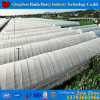 China Factory Supply Plastic Transparent Garden Greenhouse Film for Fruit Tree Growth