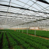 Chinese Greenhouse for Vegetables and Flowers Growing