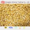 Top Quality Super Sweet Corn Kernels