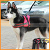 Pet Dog Working Training Sports Dog Harness Vest Set