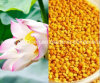 Health Food, Top EU Pure Natural Lotus Bee Pollen, Gift of Nature No Antibiotics, No Heavy Metals, No Pathogenic Bacteria, Nourish Internal Organs Prolong Life