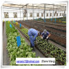 Factory Price Glass Greenhouse with Hydroponic System for Agriculture