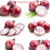 New Crop Export Good Quality Chinese Red Onion