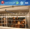 Cage for Battery Cage