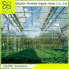 High Pervious to Light The Multi-Span Agriculture Glass Greenhouse