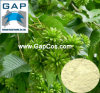 Manufacturers Supply Camptothecine Plant Extract