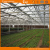 Extensive Use Multi-Span Glass Greenhouse for Planting Vegetables