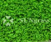 35mm Landscape/Garden Synthetic Grass with 16800 Density (SUNQ-AL00001)