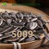 Chinese 5009 Sunflower Seeds with Black Color to Egypt Market