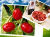 Dried Goji Berries From Ningxia (480grains per 50g)