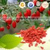 Manufacturer Supply Herb Medicine Barbary Wolfberry Fruit Goji Berry