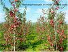 Garden Stake UV Resistant Fiberglass Pole/Rod Nursery Stake