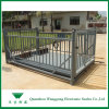 Weighing Scale for Market Ready Livestock