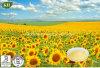 Organic 100% Sunflower Seed Extract Sunflower Phosphatidylcholine, Sunflower Lecithin