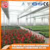 Agriculture Multi Span Plastic Green House for Vegeatbles