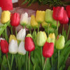 Plastic Artificial Tulip Flower, Tulip Stem