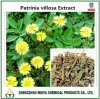 China Origin Natural Dahurian Patinia Herb Powder Extract
