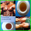 Safe Delivery 99.9% Boldenone Undecanoate/Equipoise Steroids Anabolic Hormones