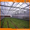 Beautiful Polycarbonate Sheet Multi-Span Venlo Type Greenhouse