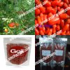 High Quality Organic Goji Berry
