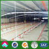 Professional Design Light Steel Structure Poultry Commercial Chicken Houses