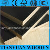 Shuttering Board/Phenolic Board/Plywood Sheet/Construction Plywood