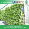 Green Houses Vertical Nft Hydroponic Growing System