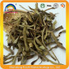 Aloe Vera Herb Tea for Weight Lose Tea