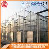 Multi-Span Steel Frame/ Aluminum Profile PC Sheet Greenhouse for Flower