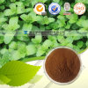 High Quality 100% Natural Peppermint Extract Natural Plant Extract