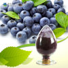 Bilberry Extract Anthocyanin 25% CAS: 84082-34-8