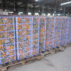 Regular Supplier for Fresh Baby Mandarin Orange