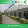 Multi-Span Commercial Polycarbonate Sheet Greenhouse