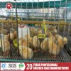 Laying Broiler Cages with Poultry Feeding Equipment (A-3L90)