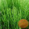 Organic Horsetail Extract Powder/Equisetum Arvense L. /7% Organic Silica