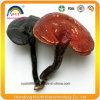 Pure Natural Herbal Ganoderma Lucidum