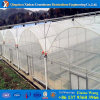 Low Cost Commercial Plastic Film Greenhouse Invernadero for Tomate