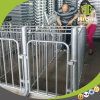 Durable Individual Pig Gestation Crate Using in Modern Pig Farm
