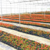 2016 Best Sell PC Sheet for Flower Greenhouse