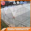 Multi-Span Flower/ Vegetable Plastic Film Greenhouse