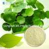 Natural Centella Asiatica Extract Asiatic Acid 95%